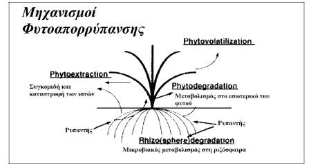 Μηχανισμοί που εμπλέκονται στην διαδικασίας της φυτοαπορρύπανσης (Ζαμπετάκης, 2005)