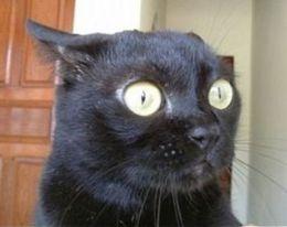 surprised-cat1_lg