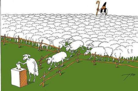 sheep-voting